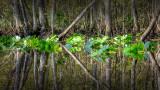 Little Black Creek #1