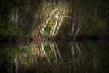 Little Black Creek #8