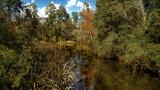 Nature Preserve at University of West Florida