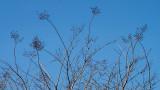 Crepe Myrtle in Winter