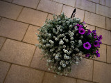 Purple and White Flowers