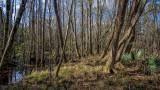 Seton Creek Historic Preserve #3