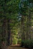 Seton Creek Historic Preserve #1
