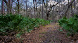 Seton Creek Historic Preserve #5