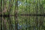 Trout Creek #10