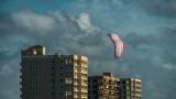 Kite in the Morning Light