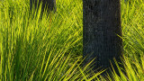 Grass and Trunks