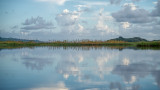 Mid Morning on Guana Lake