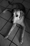 Larkin in Black and White