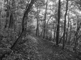 UNF Nature Trail #1