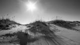Johnson Beach II