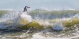 2016 October Surfer 2