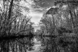 Thomas Creek in Winter #4