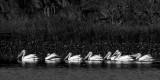 Feb 2017 Guana River #7 BW