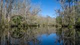 Lofton Creek in Winter #1