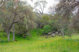 Spring 1 -2012