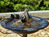 Bird 2A.jpg