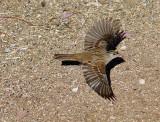 Bird 6A.jpg