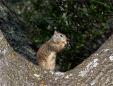Squirrel 7A.jpg