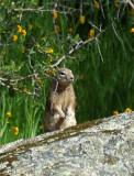 Squirrel 9A.jpg
