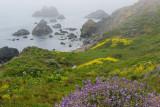 Coastal Spring Flowers