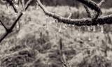 Winter of 2014 - Ice Storm