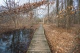 A Wooden Pathway -  Rowe Woods