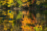 Autumn On Powel Crosley Lake