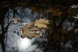 Winter Floaters