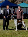 BOB and Junior in Group 13  1/2 months old Judge Mr M. Curk Aug 2012