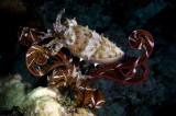 Cuttlefish and Crinoid