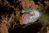 Cuttlefish and prey