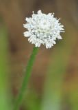 Wildflowers of eastern North America