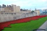 Tower Bridge Poppies