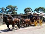 Sovereign Hill Coach  Team