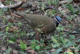 Cuba birds, March 21, 2016