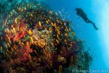 Submarinas - Underwater
