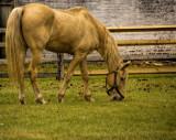 Cavalry Horse.jpg