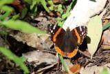 March 22nd 2012 - Butterfly - 0367.jpg