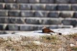 May 16th 2011 - Bird - 2101.jpg
