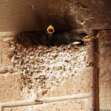 May 19th 2011 - Baby Birds - 2108.jpg