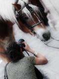 fotografa caballo