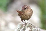 Birds of Shetland 2014