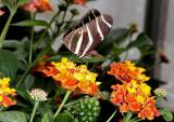 non_british_butterflies