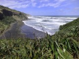 Muriwai Beach Gannets 2016-2017