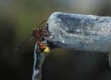 thirst - Barry