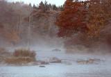 Frosty Mist - Brenda