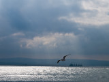 Crossing the Dardanelles - Stefan