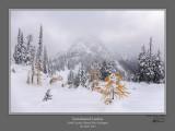 Snowbound Larches Maple Pass.jpg