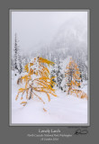 Lonely Larch Maple Pass.jpg